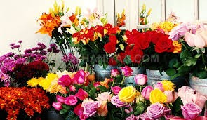 deepak flowers pvt ltd
